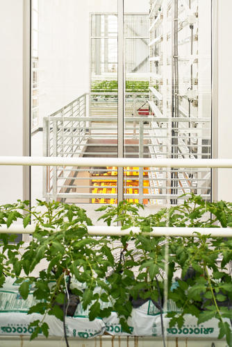 <p>If all goes according to plan, the three-story greenhouse will be harvesting more than 100,000 pounds of fresh, locally grown veggies annually.</p>