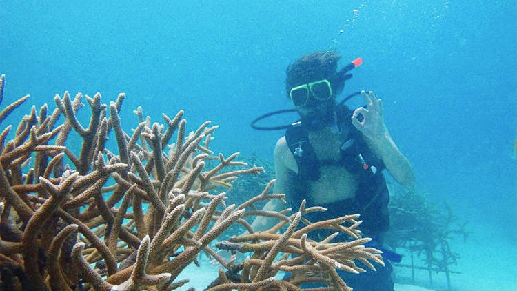 <p>Using recently developed techniques, a startup plans to grow pieces of coral as much as 50 times faster than it can grow in the ocean.</p>