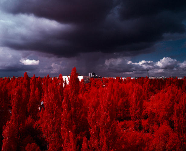 <p><em>A storm approaching Pripyat from The Red Forest</em>, 2012. Exclusion Zone, Chernobyl. 120mm CIR Photograph.</p>