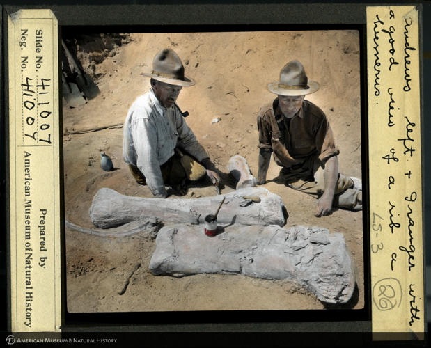 <p>Roy Chapman Andrews (left) and paleontologist Walter Granger pose with a fossil rib and humerus on a Gobi expedition.</p>