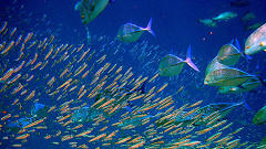 How Schools Of Fish Can Lead To More Efficient Wind Farms