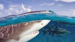 "Business Trends ""Shark Tank"" Investors Are Biting On In 2013"