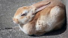 Animal Testing Banned In All Cosmetics Sold In The European Union
