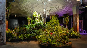 How The Lowline's Underground Park Could Inspire Brighter Indoor Living