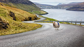 This Sheep Is Mapping The Faroe Islands By Wandering Around With A Camera