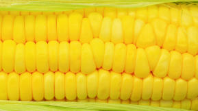Monsanto's Genetically Modified Corn Is Coming To A Walmart Near You
